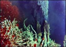 Воды Красного моря